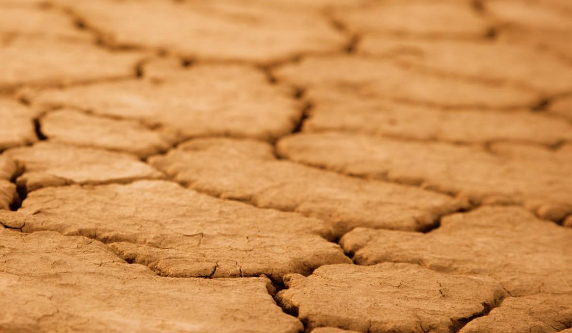 Drought Safe Summer Lawn Fertiliser 3 month controlled release XCU Organic Supplier