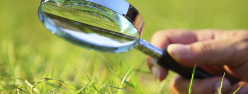 SmartLawn Lawn Fertiliser Manufacturer Supplier to UK Lawn Care