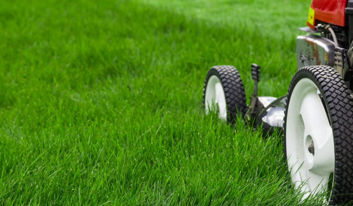 Rich Green lawn fertiliser supplier for professional lawn care