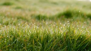 close-up-dew-field-72296